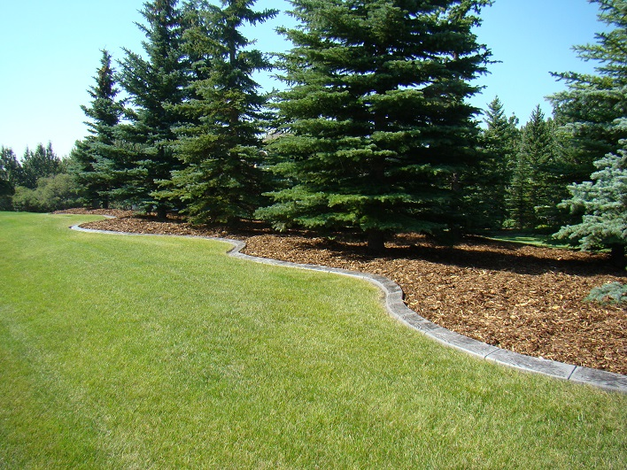 Shredded Pine with Curbing